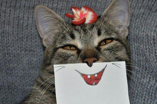 прикол кот картинки